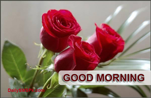 Red rose good morning wallpapers pics images1 good morning quotes red
